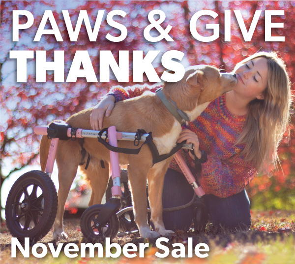 Paws-and-Give-Thanks-1