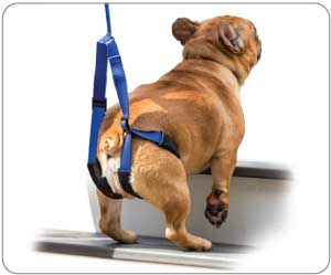 Up-n-Go-Support-Leash