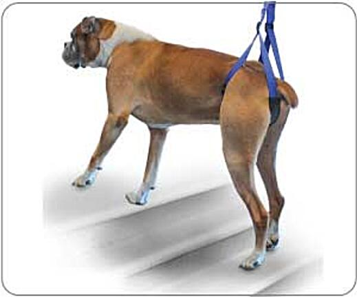 Up-n-Go Rear Support Leash