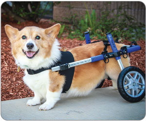 Walkin' Wheels Wheelchair